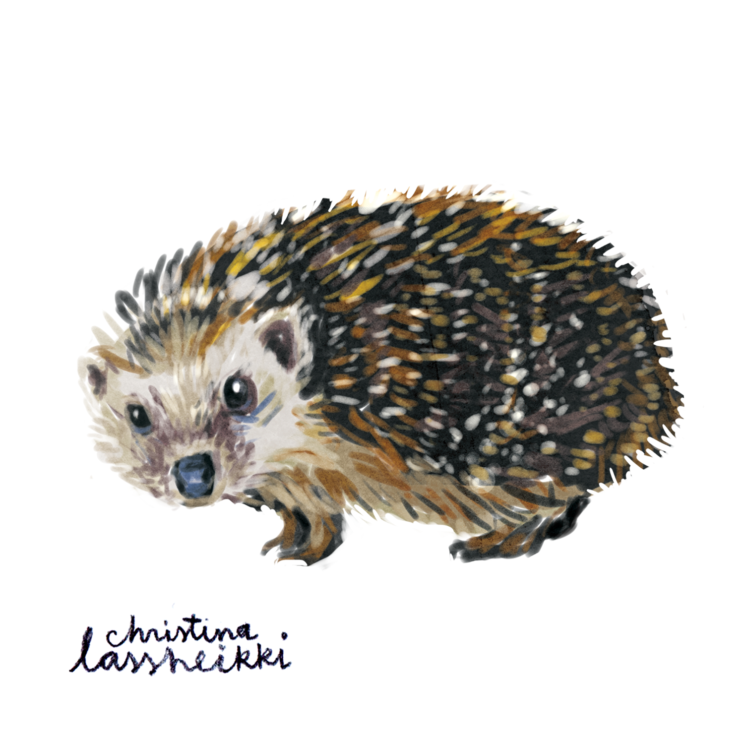 hedgehog_digital
